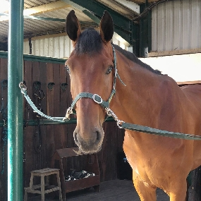 Event Horses for sale, Eventing Horse Sales, Eventing Horses for